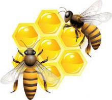 Ученые БИ ТГУ вернут России чистопородных пчел