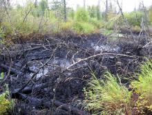 Вернуть озеро к жизни Технология, разработанная в БИ ТГУ, позволяет очищать дно водоемов, загрязненных нефтью, и спасать их экосистемы